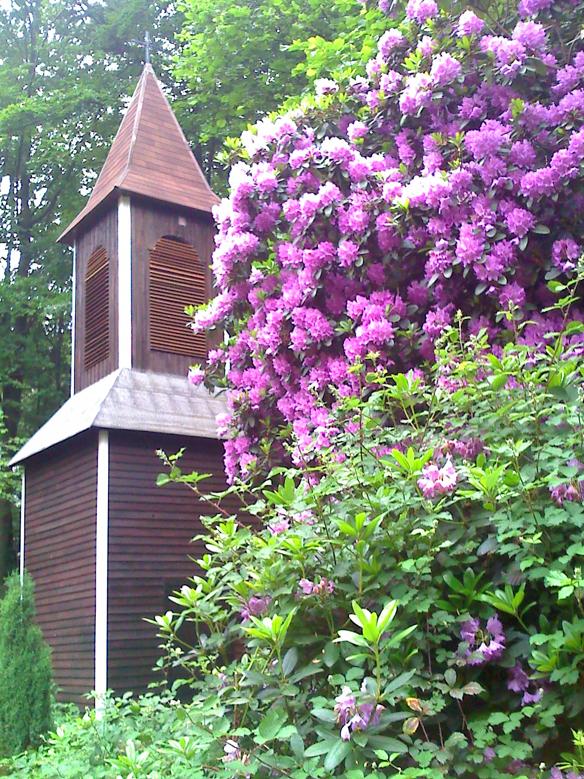 Dzwonnica-wiosna 2017